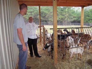 Charlotte goats