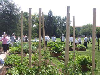 More garden again