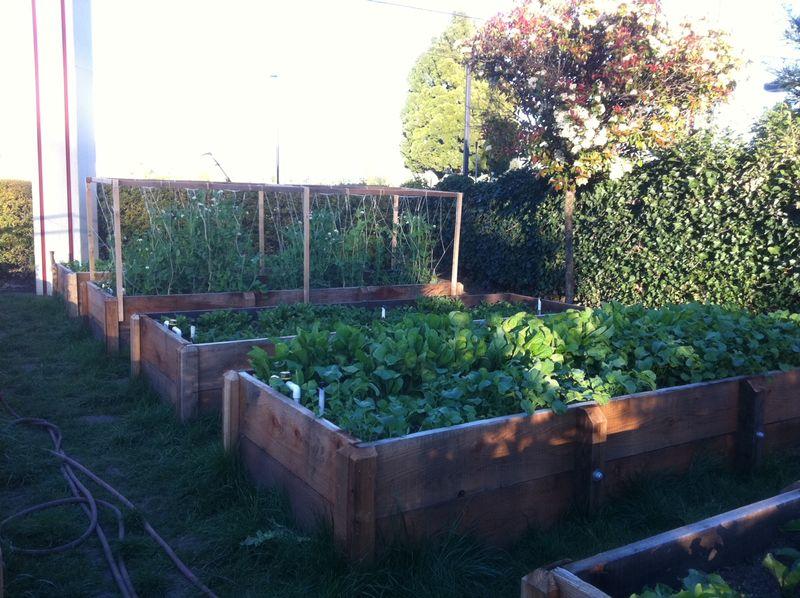 Napa garden1