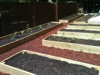 Just planted corporate garden