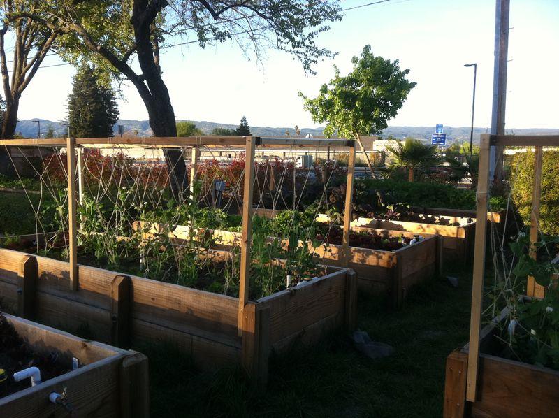 Napa garden2